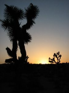 High Desert in Joshua Tree National Park